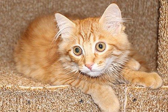 Если планируете переезд с кошкой в другую квартиру или дом