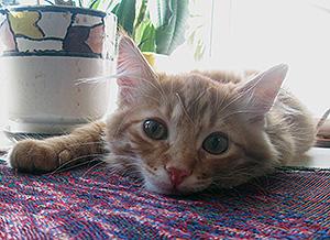 кот после переезда в новую квартиру