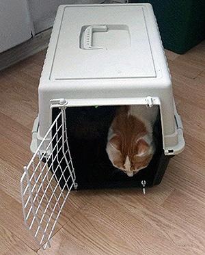 переезд кошки