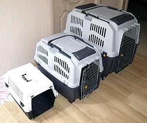 переноска для кошки при переезде на новую квартиру
